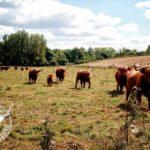 élevage Highland Cattle Bourgogne